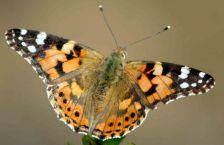 Dia de les papallones